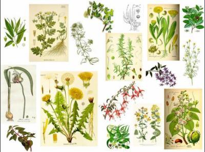 Plantas medicinales salaminaciudadluz for Origen de las plantas ornamentales
